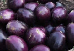 Eggplants Katha morning market.