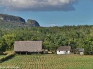 Vinales -- tobacco farm